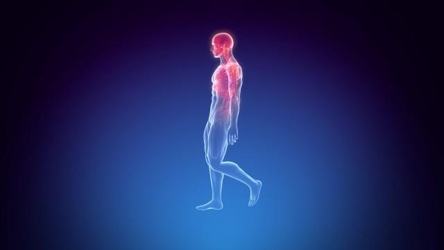 Human Anatomy Side Scan 3