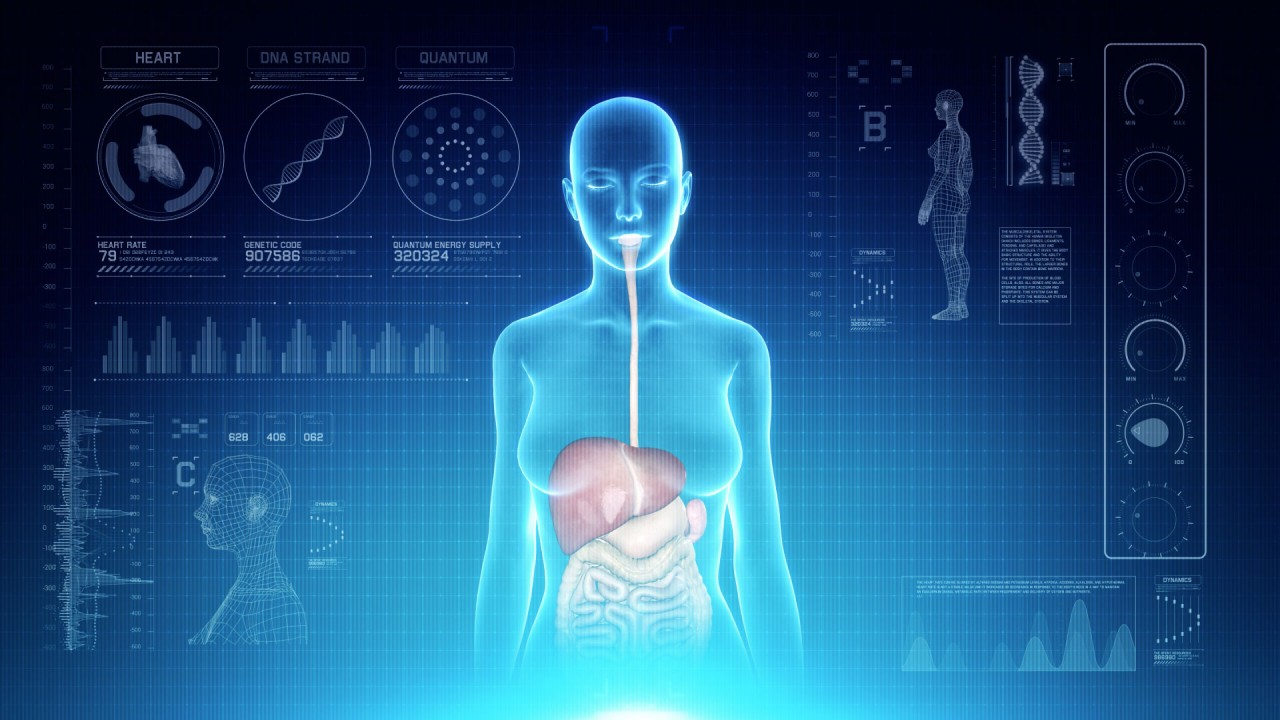 Futuristic Interface Display Of Female Body Scan With Human
