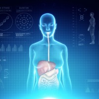 Female Digestive System Anatomy on Virtual Futuristic Blue Touch Interface