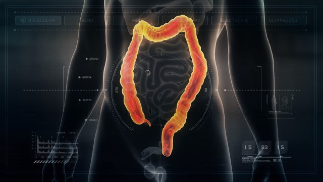 Anatomy of Human Male Colon on Futuristic Medical Interface dashboard. Seamless Loop. Animation.