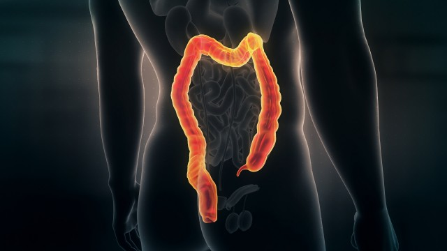 Anatomy of Human Male Colon on Black Background. Seamless Loop. Animation.