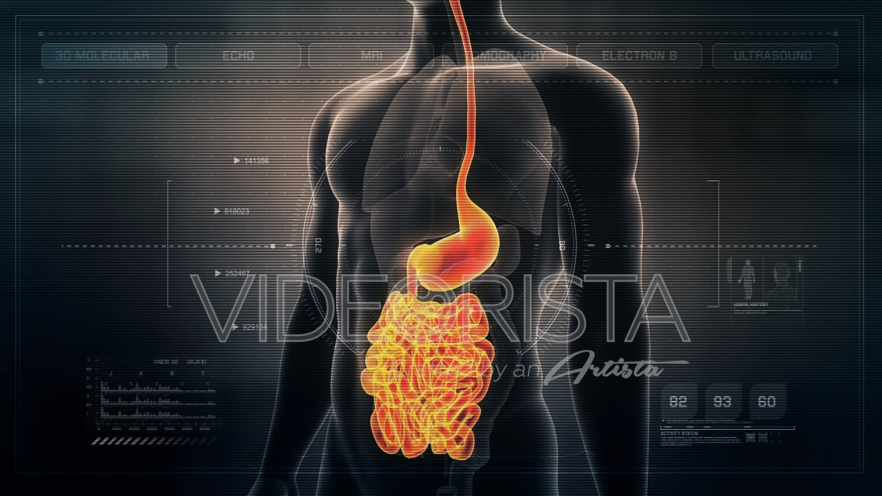 Futuristic Interface Display Of Human Male Digestive System Gut And