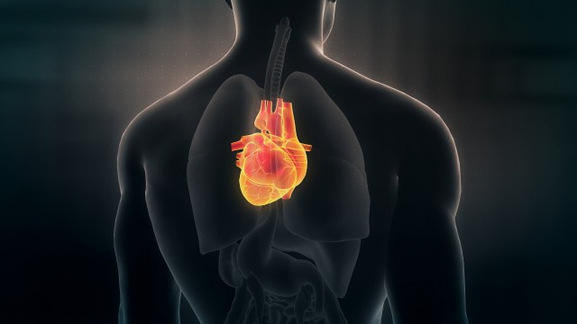 Anatomy of Human Male Heart on Black Background. Seamless Loop.Animation.