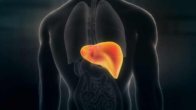 Anatomy of Human Male Liver on Dark Background. Seamless Loop.Animation.