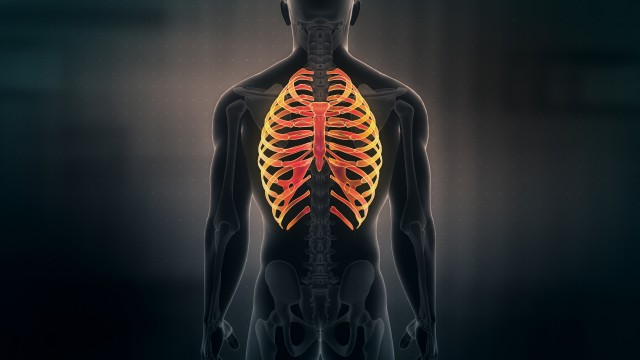 Anatomy of Human Male Rib Cage on black background. Seamless Loop. Animation.