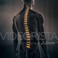 Anatomy of Human Male Spinal Discs on black background. Seamless Loop. Animation.